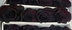 Tinted Roses Black
